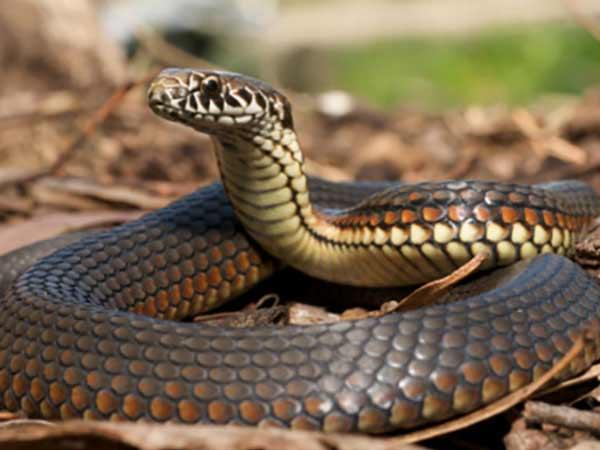 Mơ thấy bị rắn cắn là điềm báo gì? Con số may mắn?