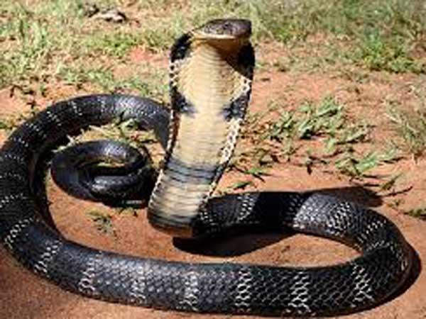 Mơ thấy bị rắn cắn là điềm báo gì?