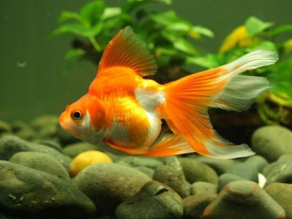 Mơ thấy cá là điềm báo gì, tốt hay xấu - Cá là số mấy?