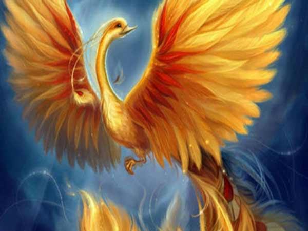 Mơ thấy chim phượng hoàng là điềm báo gì