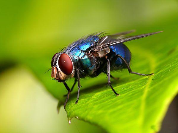 Mơ thấy con ruồi là điềm báo gì, ghi con đề nào chắc tay?