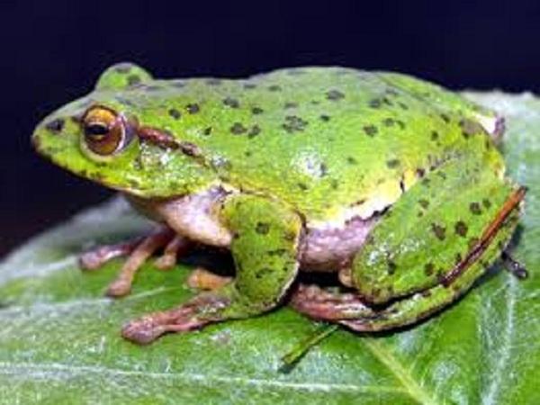 Mơ thấy ếch đánh con gì trúng lớn