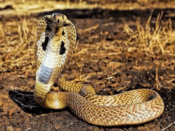Những con số may mắn khi mơ thấy rắn